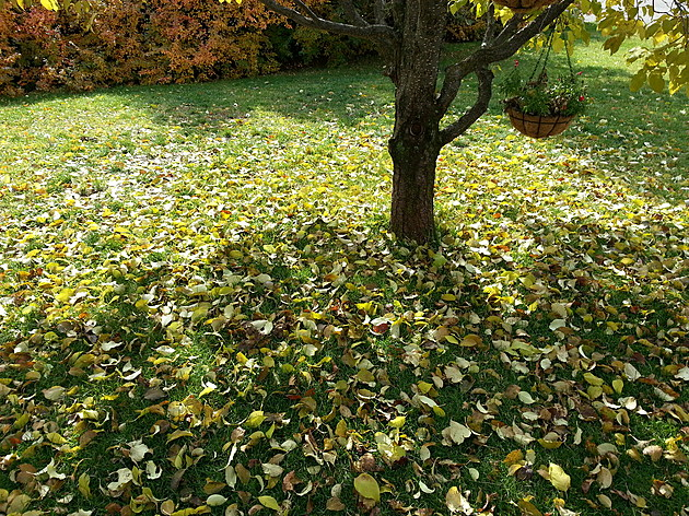 The City of Bozeman Fall leaf pickup schedule