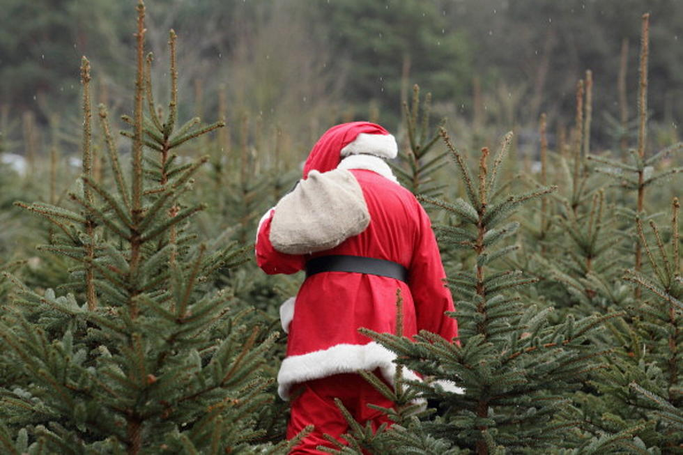 Bozeman Christmas Tree Permits and How to Keep Trees Fresh